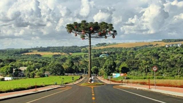 4 Pohon ini Tidak Boleh Ditebang Karena Dianggap Suci-Pohon Araucaria