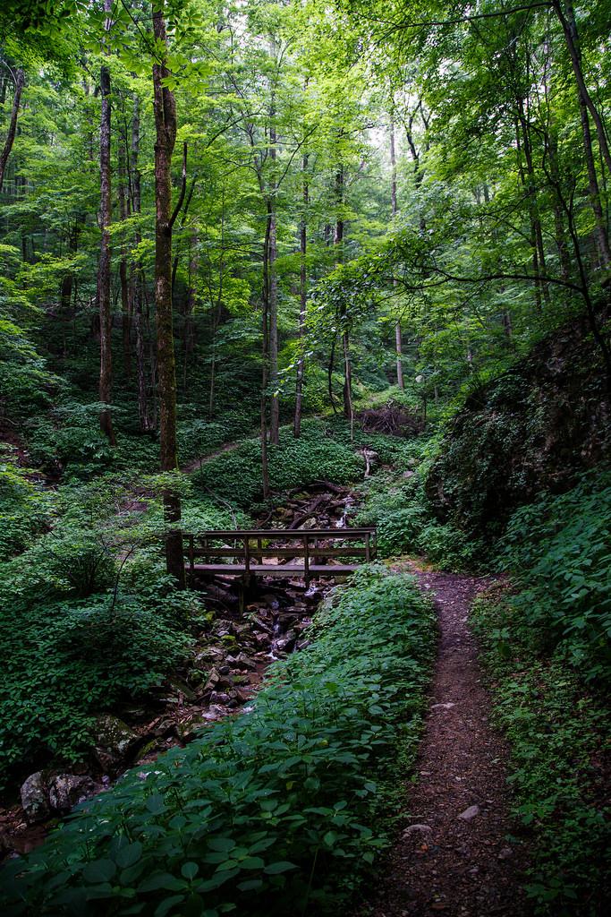 petit pont dans la forêt