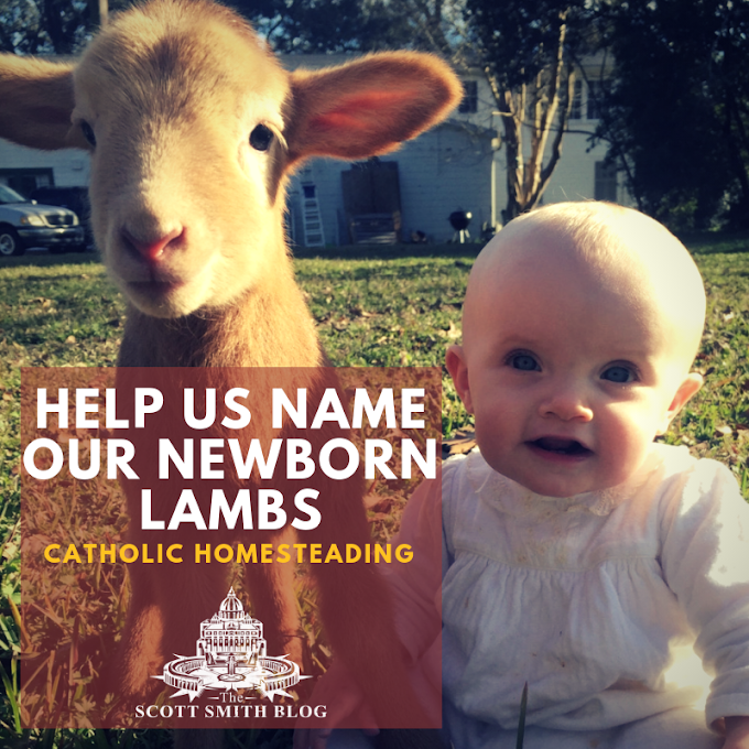 What should we name our Newborn Twin Lambs?