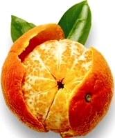 Foto de la mandarina - Fruta cítrica