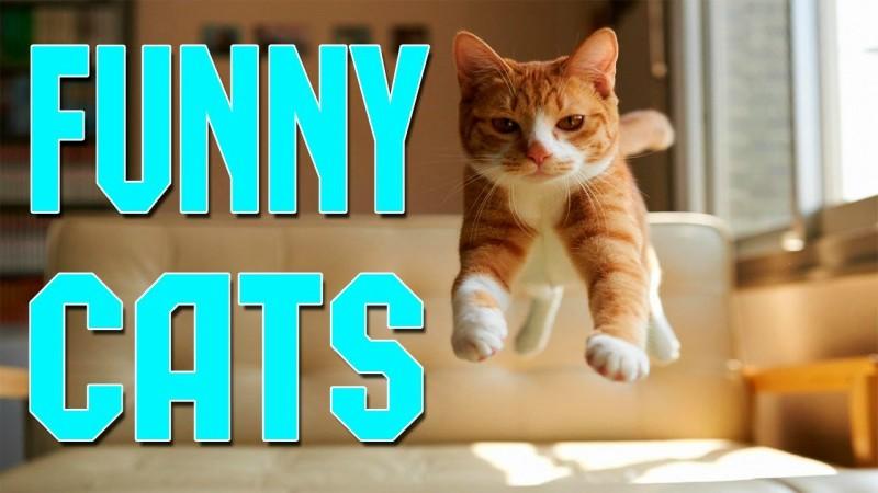 Όταν οι γάτες κάνουν το διαδίκτυο να ξεκαρδίζεται από τα γέλια!!! (βίντεο)