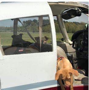 Abandoned dogs and kitten from Antlers get private plane ride and heroes welcome in Lincoln, Nebraska