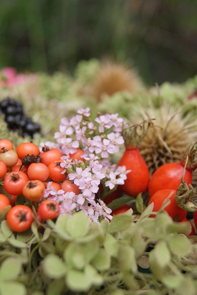Herbst Floristik Feuerdorn Hagebutten Früchte Hortensien
