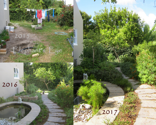 Froggy Pond 2015 to 2017