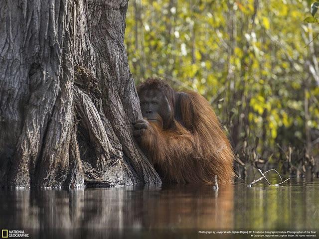Οι καλύτερες φωτογραφίες άγριας φύσης του National Geographic για το 2017