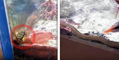 كان يقوم بتنظيف حوض السمك الخاص به .. ولكن وجد ذاك الشخص شيئًا يعيش بالداخل .. صدمه بمعنى الكلمة !!