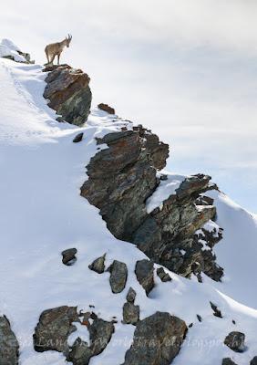 Gornergrat, 馬特洪峰, Matterhorn, 策馬特, Zermatt
