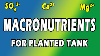 macronutrients for planted tank