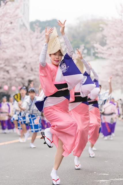 せいせき桜まつり、満開の桜の下で踊るひょっとこ連の女踊りの写真