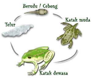 Pertumbuhan dan Perkembangan Pada Hewan