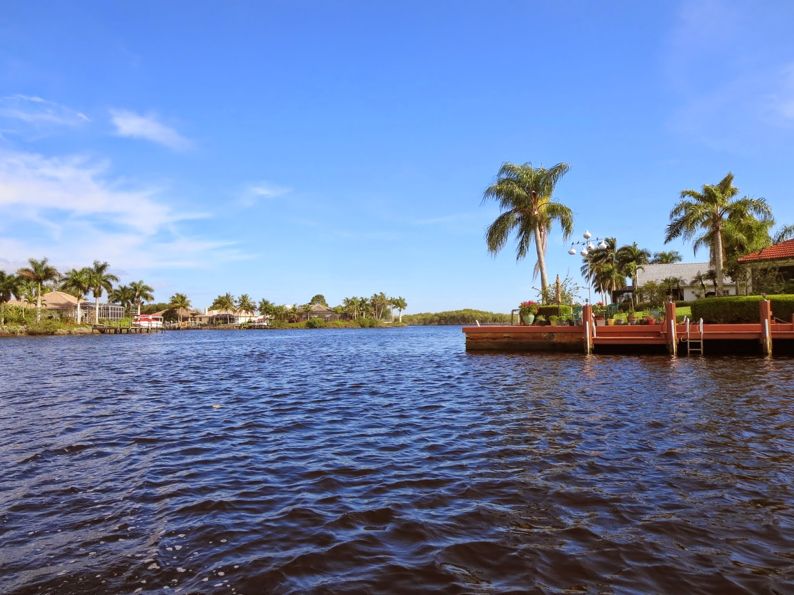 Where to see manatees in Florida: Shallow channel near Port of the Islands Marina in Naples