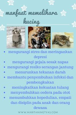 Manfaat Memelihara Kucing #500catventure