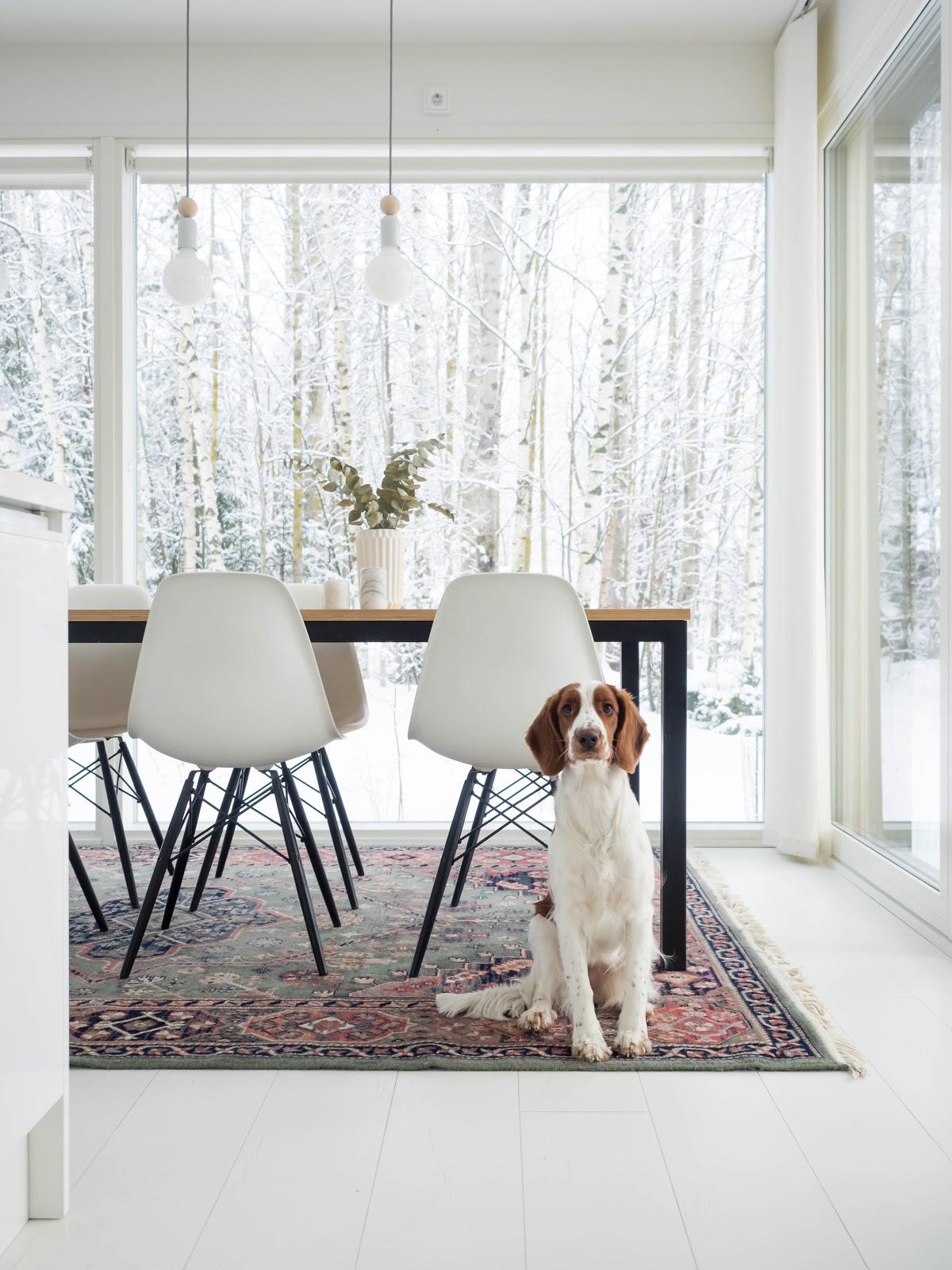 Talostakoti koira keittiössä