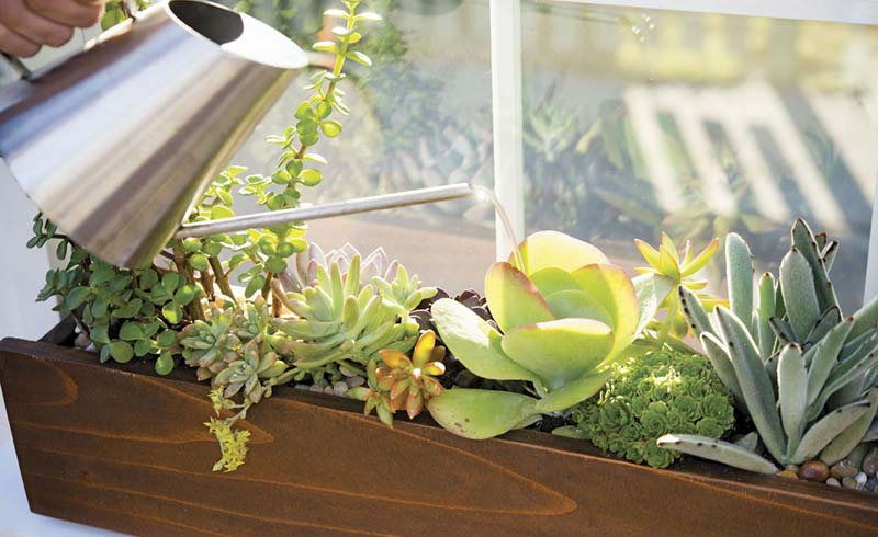 succulent window box, window box plants, plants for window boxes,