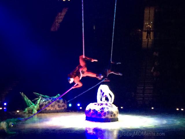 """""""OVO"""" Cirque Du Soleil Live Aruna"""