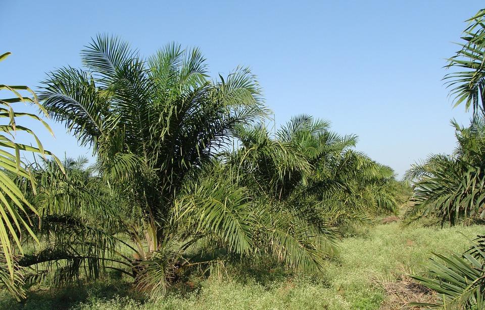 Download Makalah dan Materi Manajemen Perkebunan