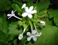 Cara Mengobati Sakit Kencing dengan Obat Sakit Kencing Herbal