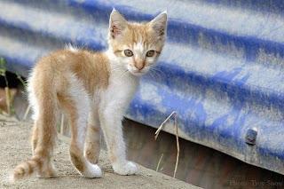 Pahami Tanda Kucing Akan Mati, Cepat Ditangani Sebelum Terjadi
