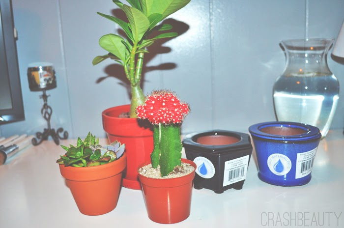 Linvilla plants and planter terrarium supplies