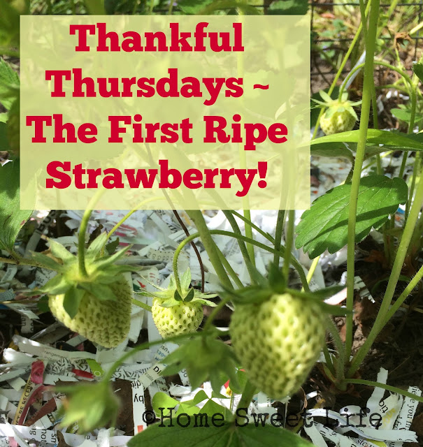 Thankful Thursdays, Ripe Strawberries