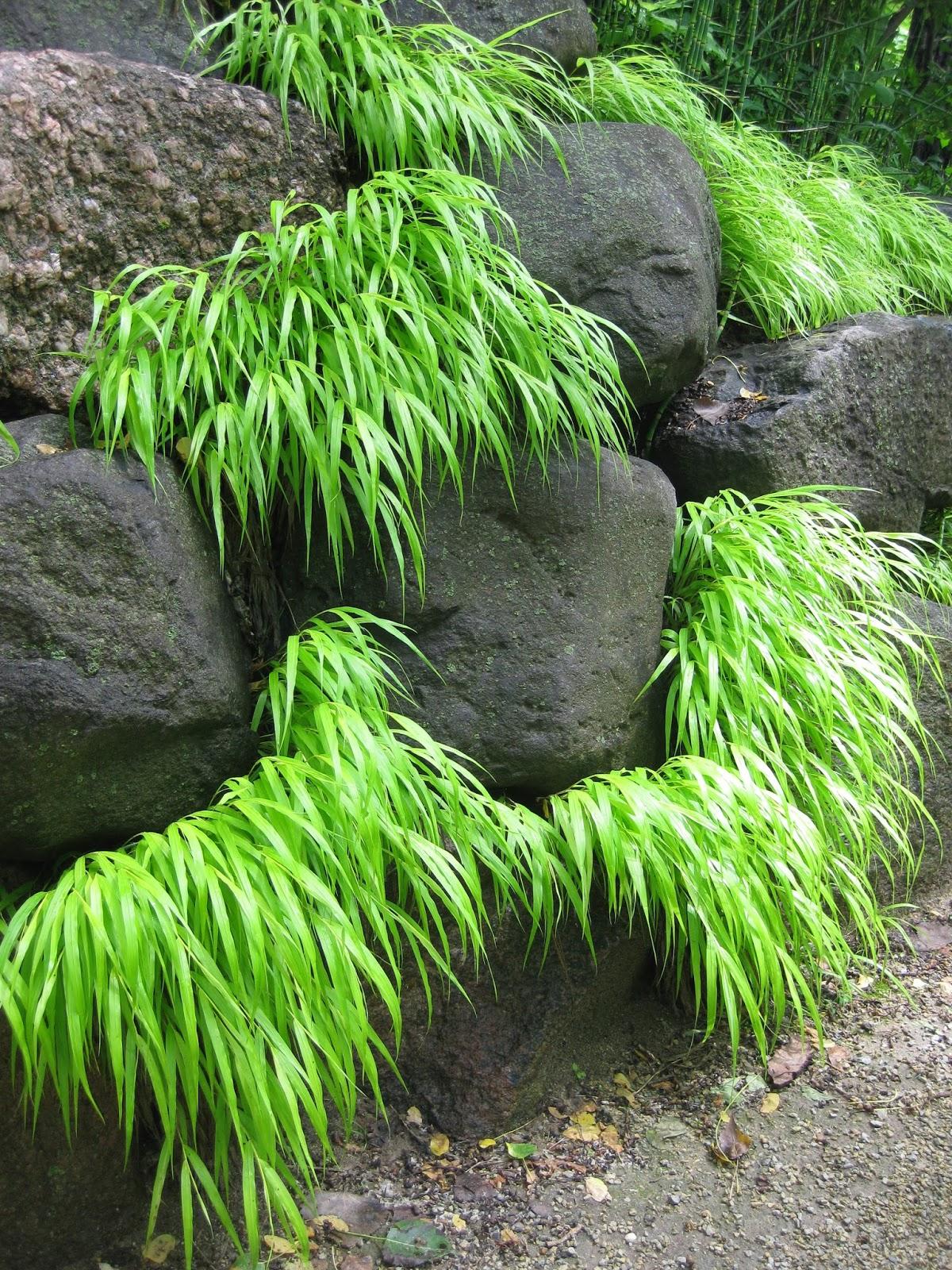 Hort Blog: Perennial Grasses