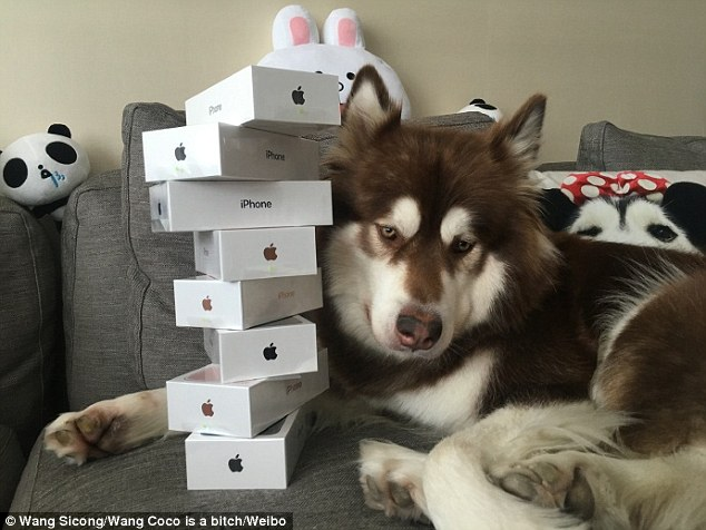 Image result for Chinese Billionaire Wang Jianlin's only son buys his pet dog eight 'iPhone 7s'