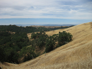 Golden hillside, oak trees, and distant ranges viewed from Dunne Ave, Morgan Hill, CA