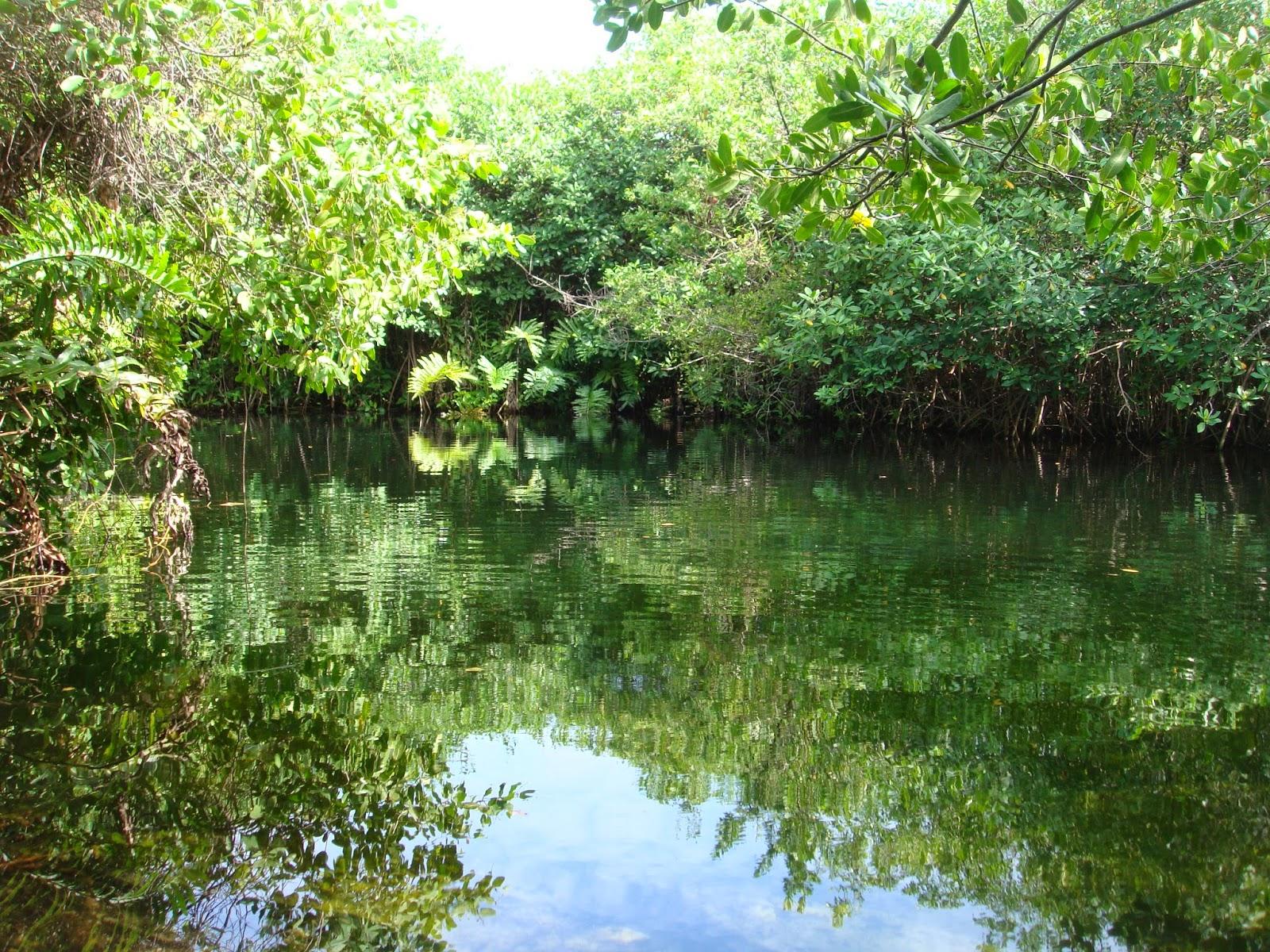 dicas viagem riviera maya xcacel