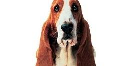 Confianza De Marca ZapateríaHush Escorpio PuppiesUna nwP8k0O