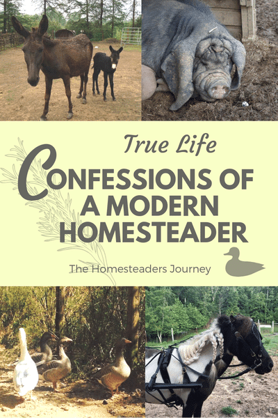 The realities of homesteading, can you save money? Can you make money homesteading?