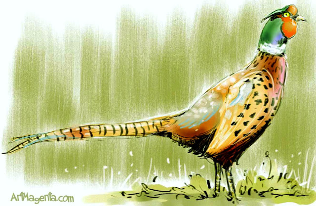 The Pheasant sketch painting. Bird art drawing by illustrator Artmagenta