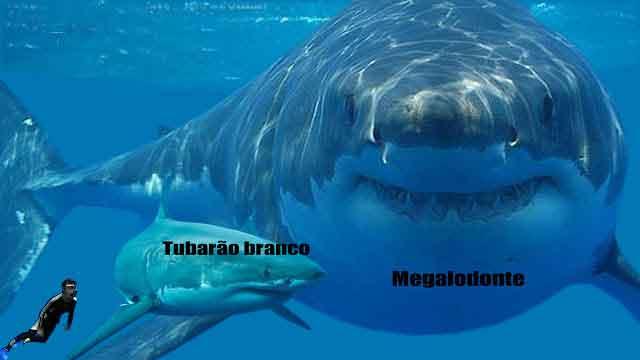 Foco Super Notícias: Biologia - Novo gênero de tubarões é descoberto