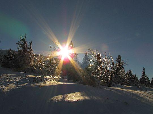 W blasku słońca gałązki zdają się wydawać z siebie neonowe światło.