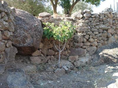 Resultado de imagen de La higuera en la piedra