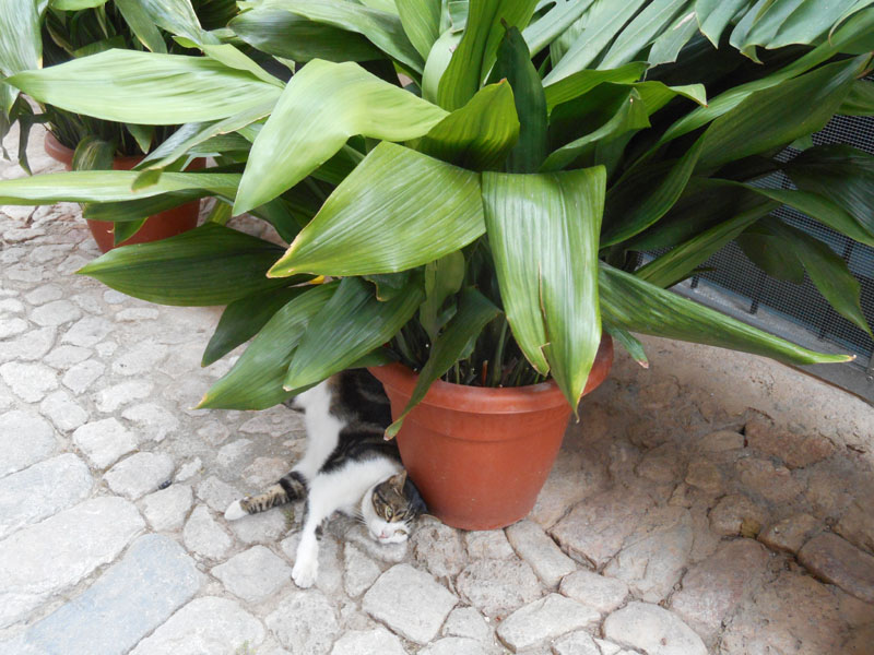 Valldemossa e le sue piante