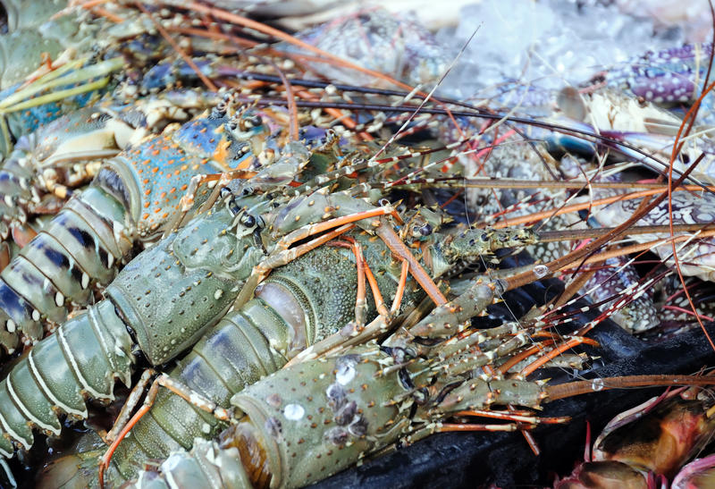 Wholesale Lobster Meat | Supplier Fresh Water Lobster