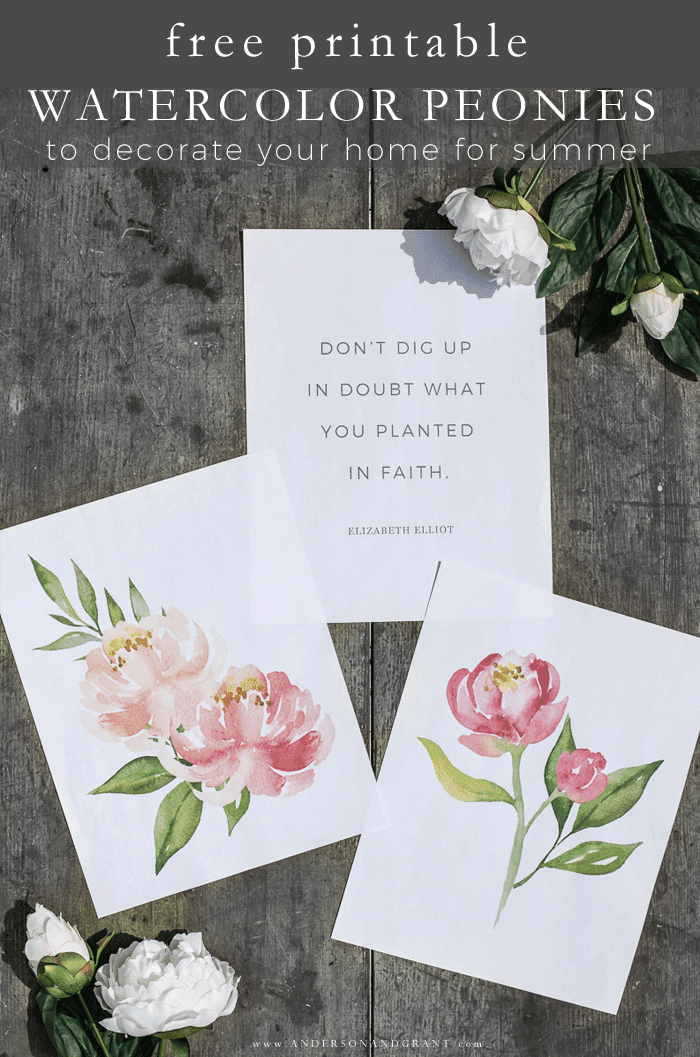 Free printable watercolor peonies