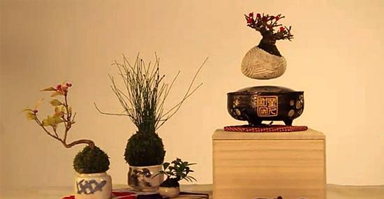 Air Bonsai - Bonsai flutuante invenção japonesa