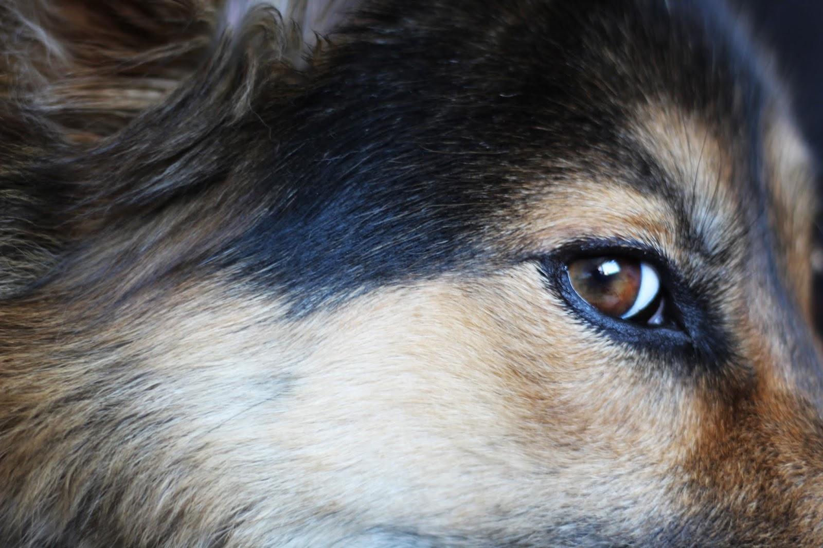 Oczami psa czyli jak pies widzi otaczający świat