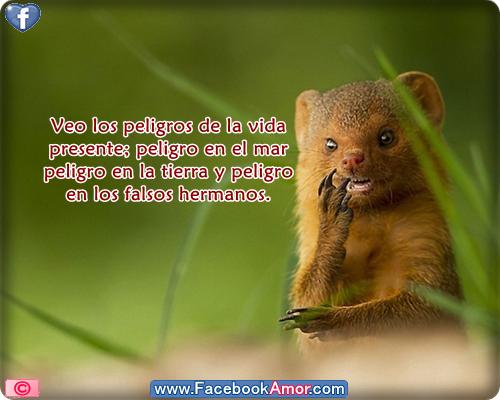Imagenes De Amor Con Animales Con Frases De Amor Imagenes De Amor