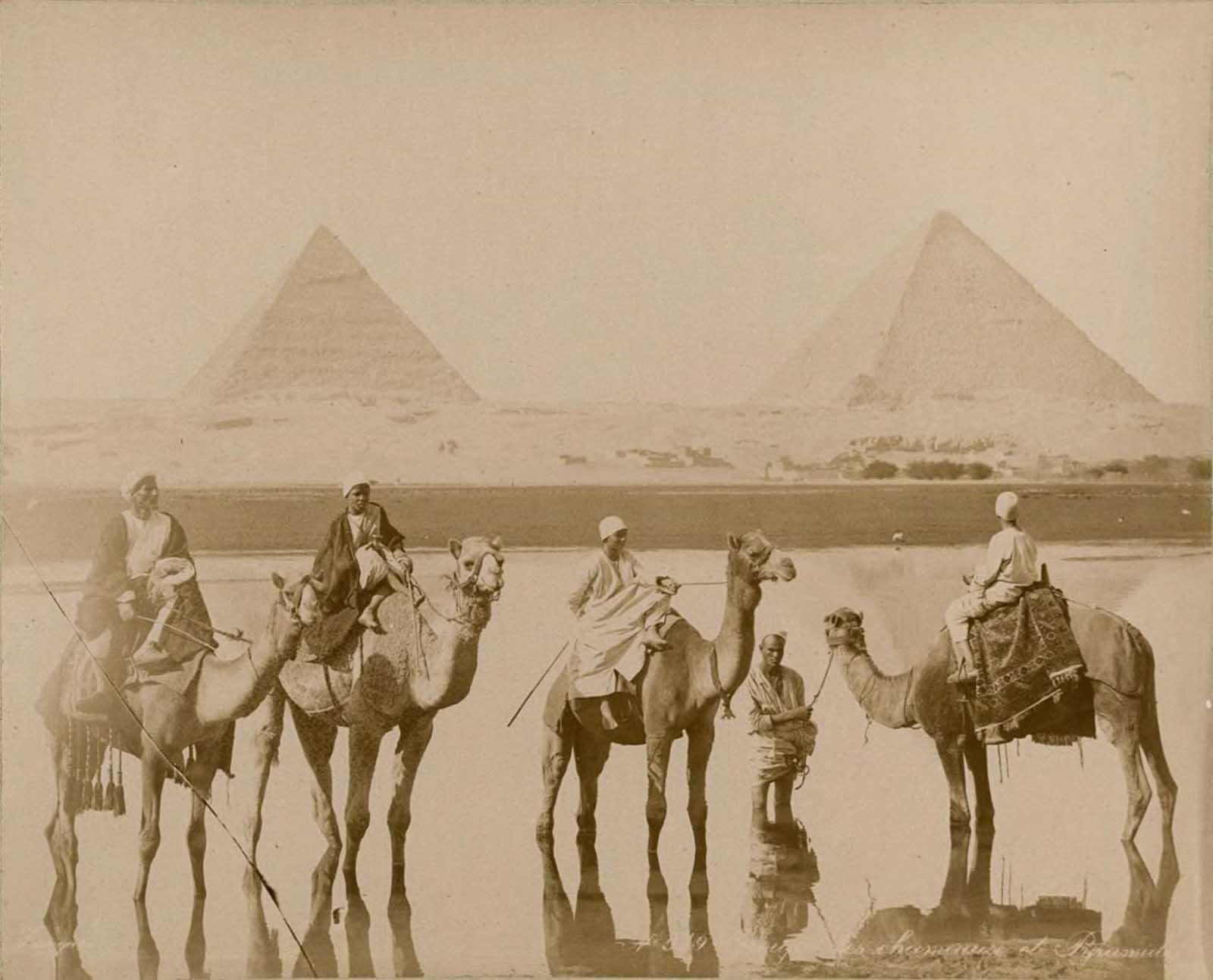 Paseos en camello cerca de las pirámides.