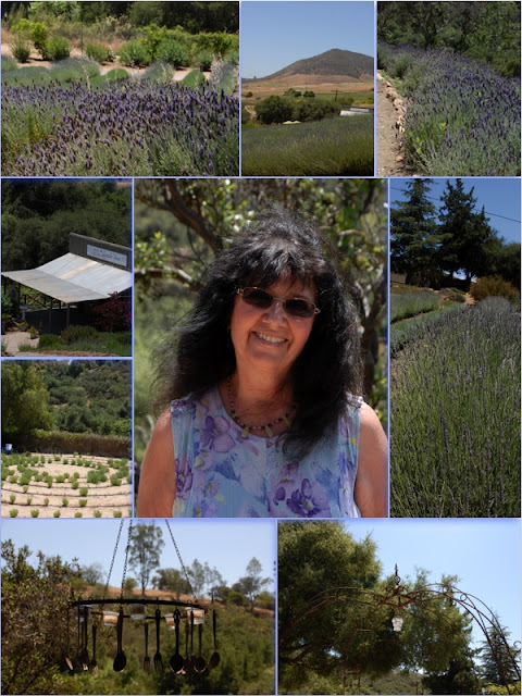 Keys Creek Lavender Farm: LadyD Books