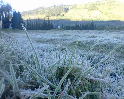 Ilustrasi mmbun upas  ketika musim kemarau di Dataran Tinggi Dieng. Foto : http://diengnews.blogspot.com/
