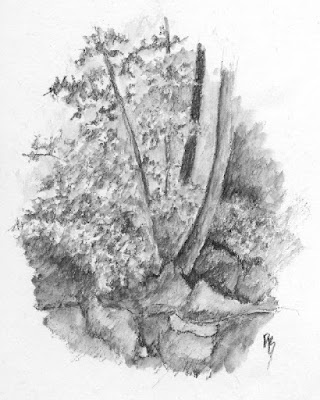 art sketch life nature plein air graphite tree rock