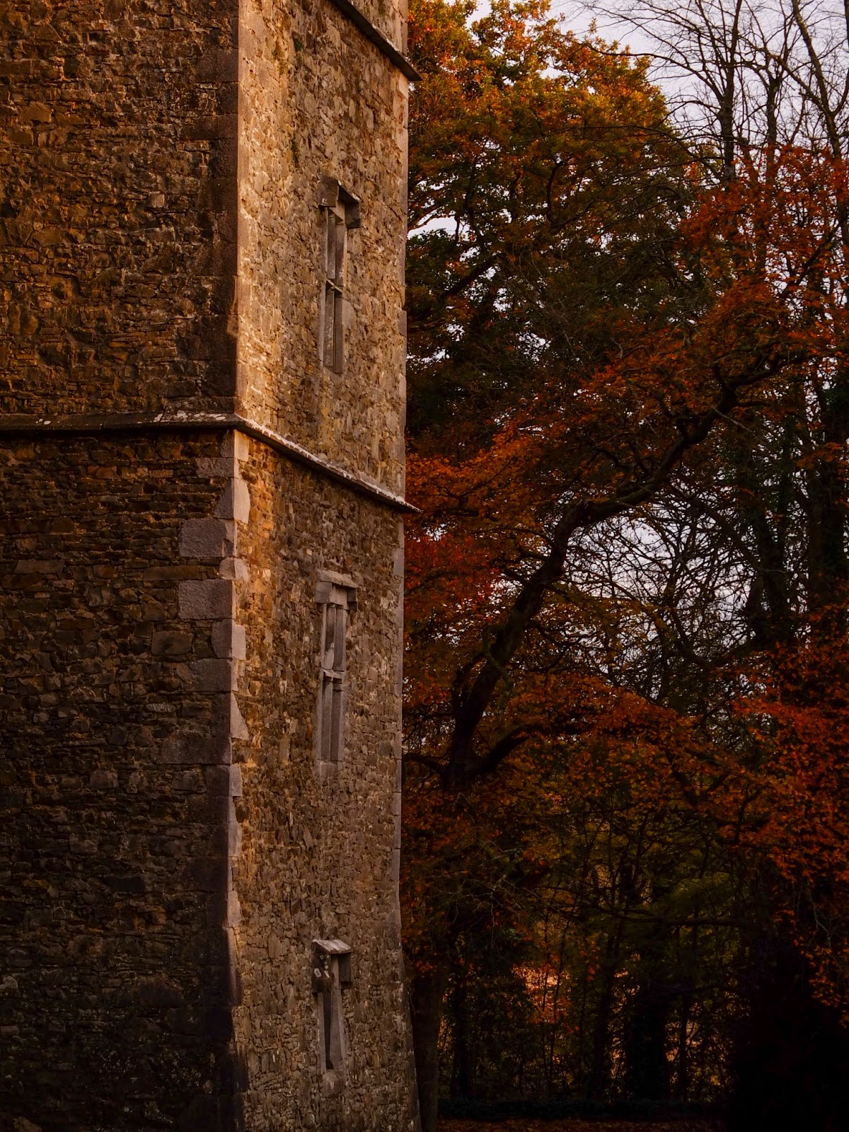 Kanturk Castle and brown autumn trees during a sunset in North Cork.