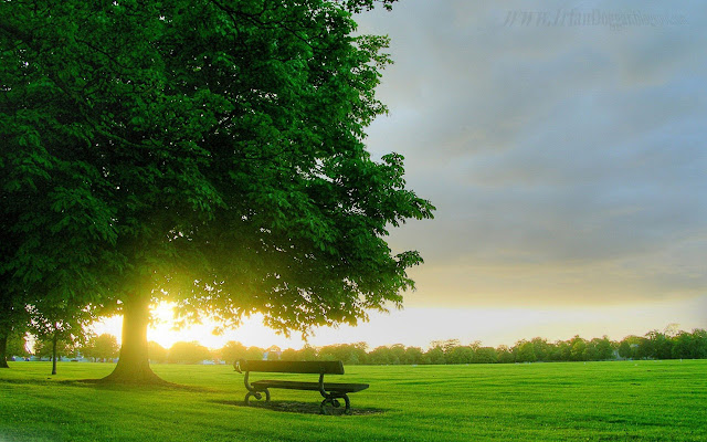 Green Park HD Wallpapers Backgrounds Free Download