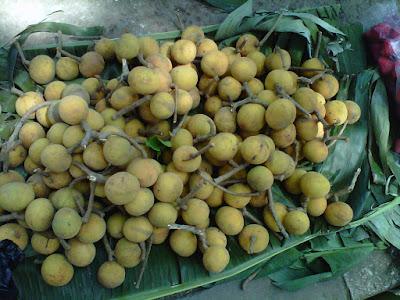 manfaat-buah-kenitu-bagi-kesehatan,www.healthnote25.com