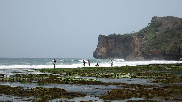 Para pencari Rumput Laut di pantai Ngunggah