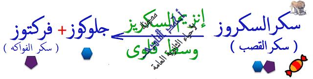 الإنزيمات - متخصصة -  لها تأثير عكسى - السكروز -  مدونة أحمد النادى- أحياء الثانوية العامة