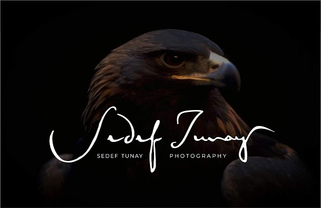 Photography Fotoğrafçı logo tasarımı mürekkep